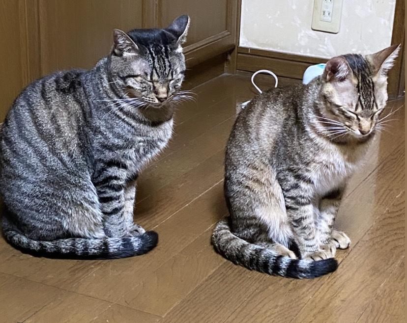 猫バンバン(=^・^=)